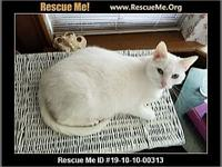My story Boo, 6yr old utd shots, FIV/LUK neg , female