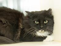 BooBoo is a 1 year old, cat-friendly female.  If you