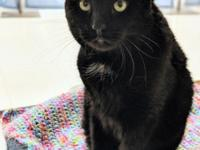 Boo-boo is a nine-year-old all black male. He was