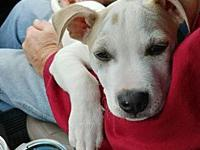 Booker's story image.jpgAll of our adoptable pets are