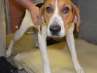 I would love a new home! Come see me at the shelter and