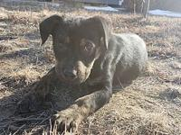 Boomer's story **Adoption pending!** Any applications