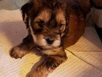 Boomer's story MEET BOOMER! Boomer is 5 weeks old and