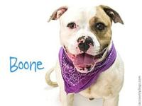 *BOONE's story Visit Boones webpage