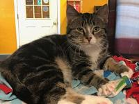 Boone's story Boone is a cute little dude awaiting his