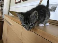 Booner - Cutie Pie Kitten's story You can fill out an