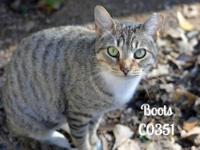Boots is a stray from the Lake Bonanza Subdivision area