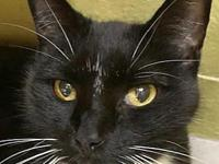 Boots's story Boots is our newest gentleman cat and at