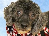 Bootz's story Meet Bootz! This old lad is just looking