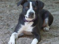 Border Collie - Bandit - Medium - Adult - Female - Dog