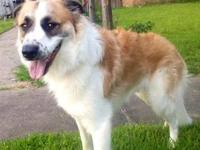 Border Collie - Beau - Large - Young - Male - Dog About