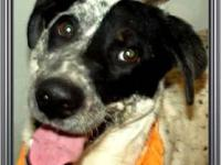 Border Collie - Bingo - Medium - Adult - Male - Dog Hi,