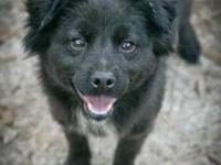 Border Collie - Brie - Medium - Young - Female - Dog My