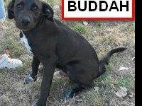 Border Collie - Buddah - Medium - Young - Male - Dog