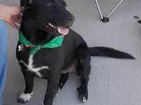 Border Collie - Carmen - Medium - Young - Female - Dog