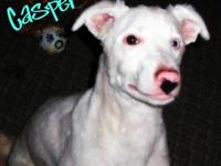 Border Collie - Casper - Medium - Young - Male - Dog To