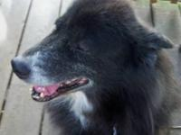 Border Collie - Comet - Medium - Adult - Male - Dog