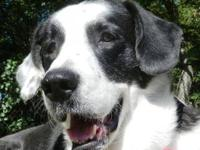 Border Collie - Dasey - Medium - Adult - Female - Dog