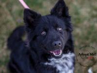 Border Collie - Delilah - Large - Adult - Female - Dog