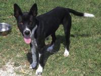 Border Collie - Grace - Medium - Adult - Female - Dog