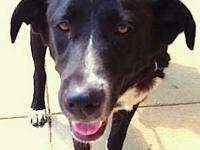 Border Collie - Jules - Medium - Young - Female - Dog