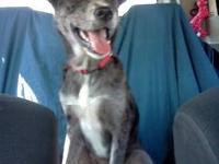 Border Collie - Julius - Medium - Adult - Male - Dog