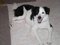 Border Collie - Keka - Medium - Young - Female - Dog
