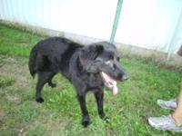Border Collie - Lily - Medium - Young - Female - Dog