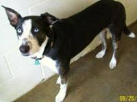 Border Collie - Lucy - Medium - Young - Female - Dog