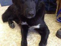 Border Collie - Mahala - Medium - Adult - Female - Dog