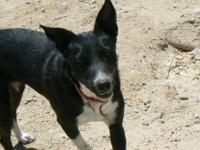 Border Collie - Mia - Medium - Adult - Female - Dog