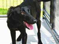 Border Collie - Missy Iii - Medium - Adult - Female -