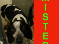 Border Collie - Mister - Medium - Adult - Male - Dog