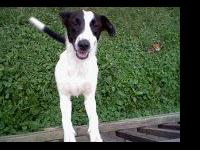 This is a female border collie mix thats 1 year and 4