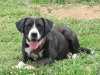 Border Collie - Piper - Medium - Adult - Female - Dog