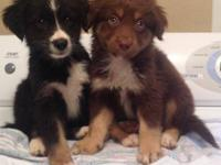 I have 2 sweet puppies ready for their new homes. They