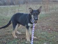 I have 8 beautiful Border Collie puppies still
