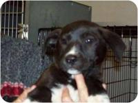 Border Collie - Ralph - Medium - Young - Male - Dog On
