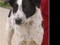 Border Collie - Rio - Medium - Young - Male - Dog Rio