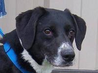 Border Collie - Sammy - Medium - Adult - Male - Dog