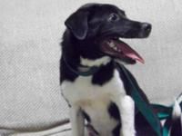 Border Collie - Simon - Medium - Young - Male - Dog Hi
