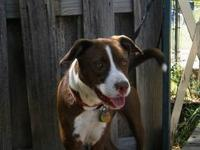 Border Collie - Tess - Large - Adult - Female - Dog