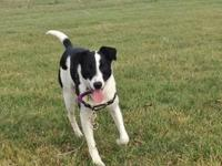Border Collie - Timmy - Medium - Young - Male - Dog Hi