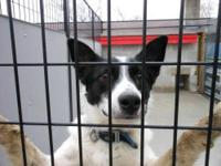Border Collie - Wally - Medium - Young - Male - Dog