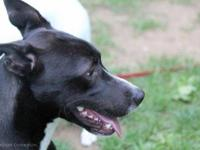 Border Collie - Blaze - Medium - Young - Male - Dog