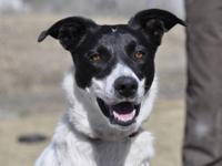 Border Collie - Gucci - Large - Adult - Female - Dog