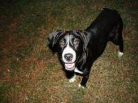 Border Collie - Toby & Brownie - Medium - Baby - Male -