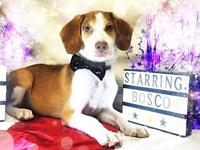 Bosco's story You can fill out an adoption application