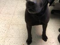 Boseman is a 3-year-old neutered male black lab.