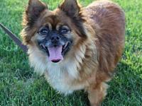 Bosley- Needs Vacation Foster 7/7-7/8's story You can